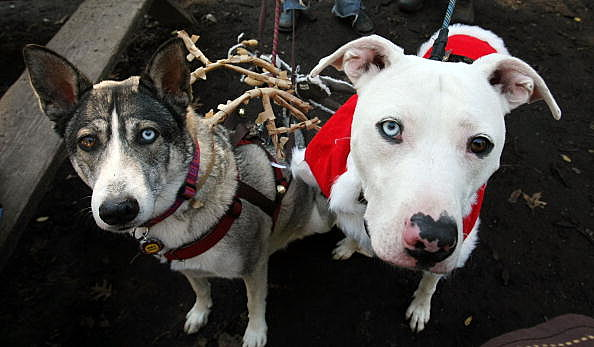 Dogs And Owners Celebrate Holidays