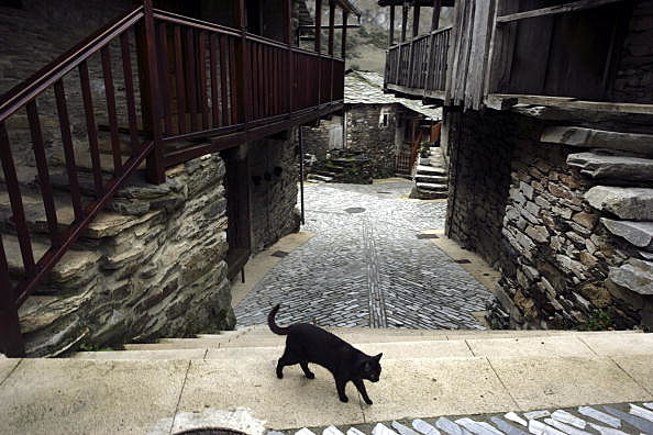 El Bierzo. Leon. Black cat. Santiago de Penalba. El Bierzo. Leon.