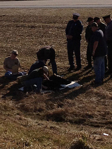 bear killed in Bay county