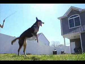 This dog can jump rope