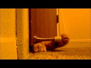 This cat plays with the doorstop, and wakes his owners.