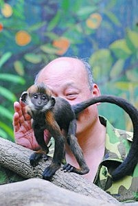 China Wuhan Zoo caretaker licks francois leaf monkey butt to help it defecate