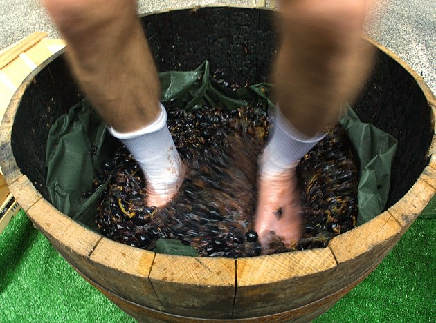 grape stomping!