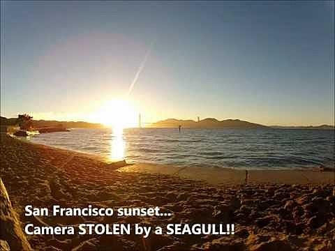 seagull shot