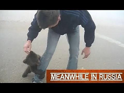 bear cub makes new friend