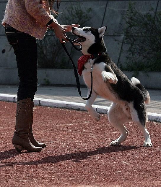 humane society dog walk tomorrow at Mott CC