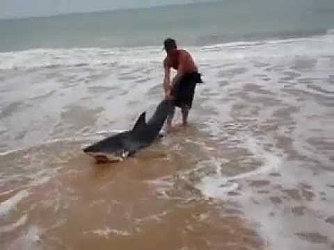 Beached Man-Eating Great White Shark Gets Human Help [VIDEO]