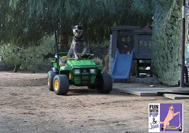 Rogue driving dog