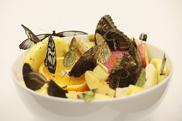 Edible insects may be good for you