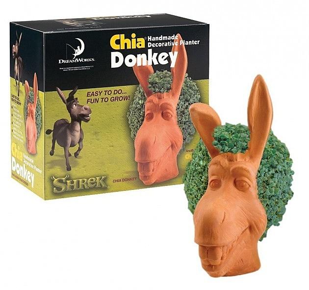 Chia donkey