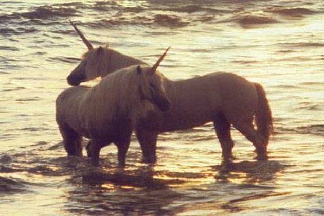 unicorns on craigslist